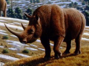 Čtvrtohorní nosorožec, foto: Wikipedia.org
