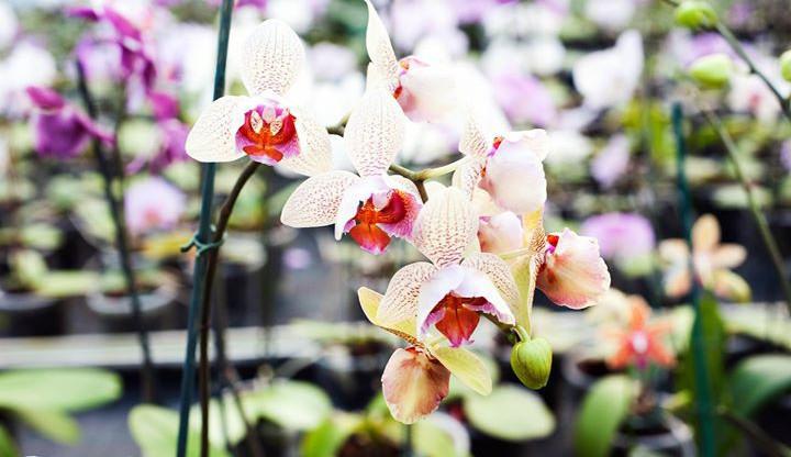 Zahrada Mendelovy univerzity nabídne sbírku orchidejí