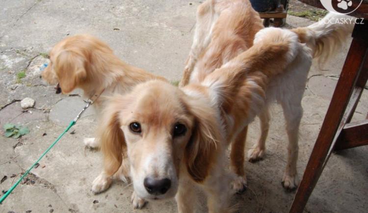 Rodina trápila psy hladem. Díky včasnému zásahu dostala zbídačená zvířata novou životní šanci