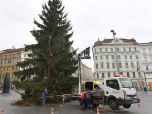 Strom na náměstí Svobody