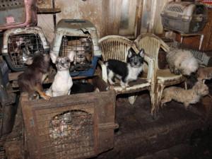 Skandální případ řešili veterináři v Kamenici nad Lipou na Pelhřimovsku