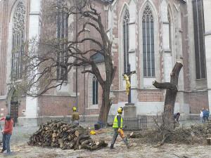 Pokácené stromy na Mendlově náměstí