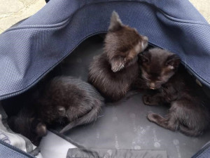 Nalezená koťata v Brně Maloměřicích
