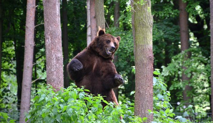 Na Břeclavsku lidé zahlédli medvěda, nejspíš krajem jen procházel