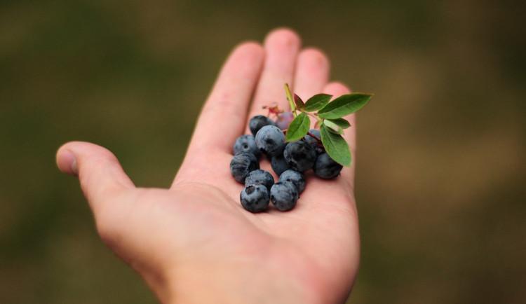 Kraj podpoří borůvkovou farmu na Ukrajině. Chlapci s těžkým životním osudem zde dostanou novou šanci