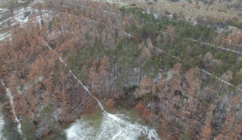 Na Kamenném vrchu uschla přes polovina stromů. Jejich těžba se ale opozdí