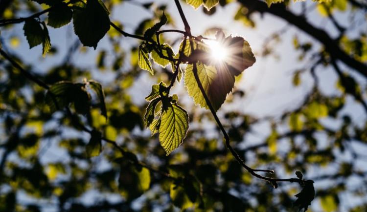 Jak se žije stromům v horkém Brně? Vědci zkoumají stresové podmínky stromů ve městě
