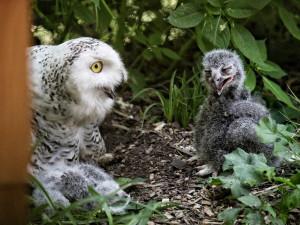 Zdroj: Zoo Brno