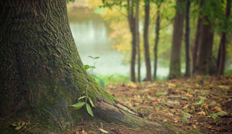 Den s lesy v Řečkovicích je akce vhodná pro celou rodinu