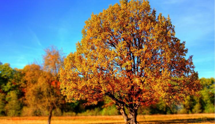 POČASÍ NA NEDĚLI: Teploty se znovu vyšplhají až k dvacítce