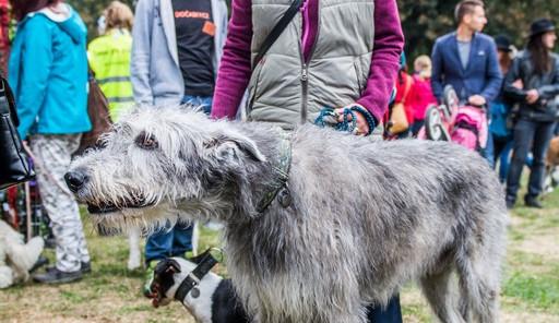 Chcete nás? Umisťovací výstava psů v Lužánkách 2018, autor: Tomáš Hrivňák